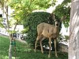 4118 Park Vista Drive - Photo 62