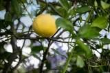 1386 Orinda Pl - Photo 43