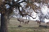 0 Black Oaks Ranch - Photo 32