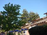 38254 Redwood Terrace - Photo 8