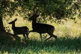 3510 Deer Lake Park Road - Photo 37