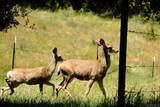 3510 Deer Lake Park Road - Photo 6