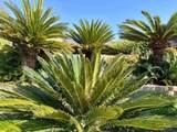 1496 Vista Claridad - Photo 30
