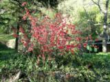 14051 Ettawa Springs Road - Photo 11