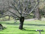 14051 Ettawa Springs Road - Photo 12