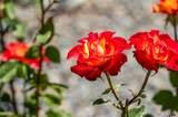 40215 Sierra Maria Road - Photo 56