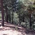 0 California Hwy 38 - Photo 11