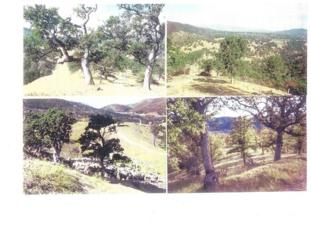540 Old Long Valley Road, Clearlake Oaks, CA 95423 (#NP17089364) :: Allison James Estates and Homes