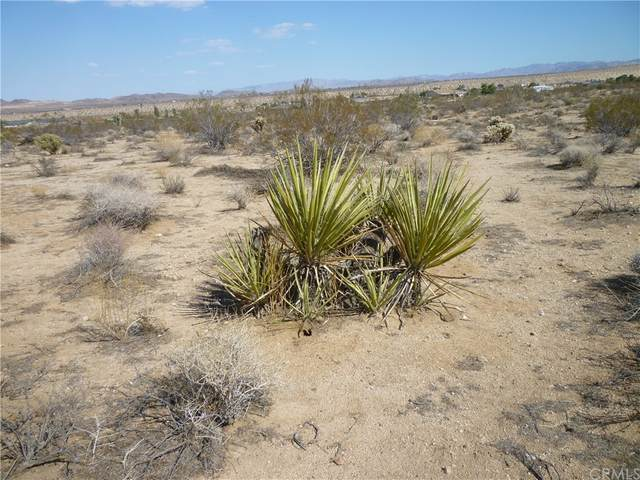 233 Ripon Avenue, Yucca Valley, CA 92284 (MLS #JT21167830) :: ERA CARLILE Realty Group