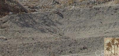 98525 Bounty, Mecca, CA 92254 (#217012420DA) :: The Ashley Cooper Team