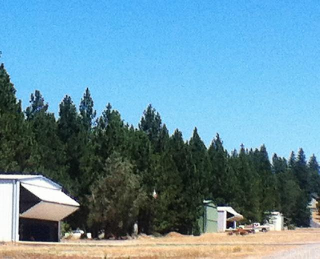 19063 Norlene Way, Grass Valley, CA 95949 (#OR18040246) :: Sperry Residential Group