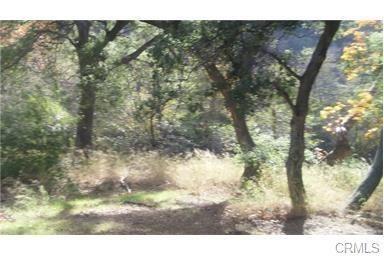 30841 Silverado Canyon Road, Silverado Canyon, CA 92676 (#OC19040179) :: McLain Properties
