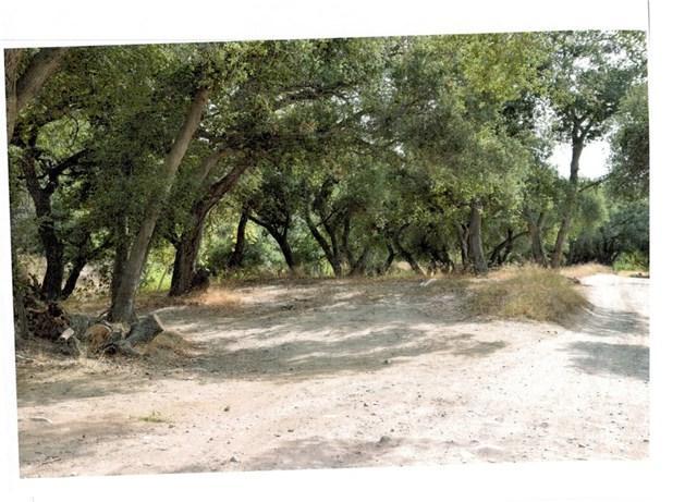 19411 Live Oak Canyon Road, Trabuco Canyon, CA 92679 (#NP19094484) :: Kim Meeker Realty Group