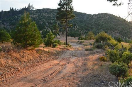 13356 Hog Ranch Road, Oroville, CA 95965 (#OR19118870) :: The Marelly Group | Compass