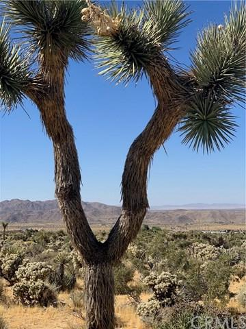 0 Onaga Trail, Joshua Tree, CA 92252 (#JT19153316) :: RE/MAX Masters