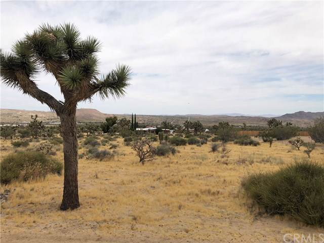 1234 Onaga Avenue, Joshua Tree, CA  (#JT19175109) :: The Laffins Real Estate Team