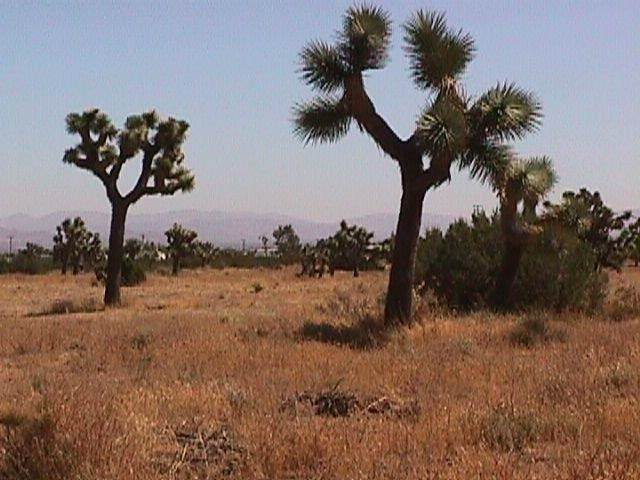 0 La Mesa Road - Photo 1