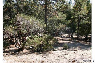 0 Walters Drive, Idyllwild, CA  (#SW19210204) :: J1 Realty Group