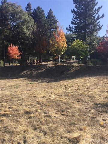 5 Park Drive, Running Springs, CA 92382 (#EV19246506) :: Better Living SoCal