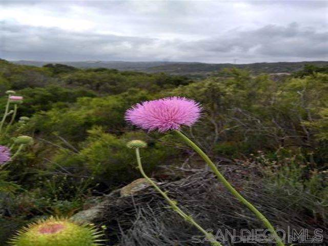 Lake Morena Dr, Campo, CA 91906 (#190063034) :: Twiss Realty