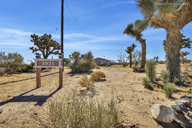 3921 Condalia Avenue, Yucca Valley, CA 92284 (#219035621PS) :: Sperry Residential Group