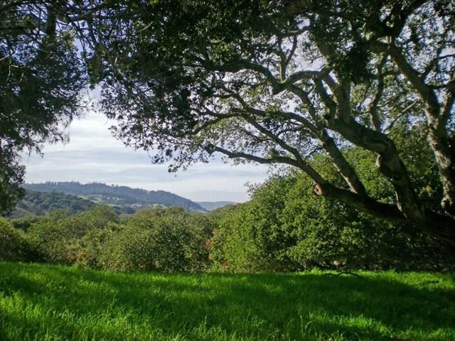 8345 Vista Monterra (Lot 151) - Photo 1