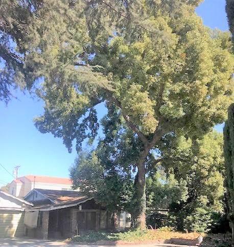 4214 Maxson Road, El Monte, CA 91732 (#219037278DA) :: RE/MAX Estate Properties