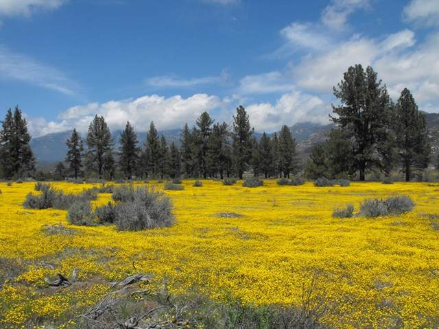 56475 Apple Canyon Road - Photo 1