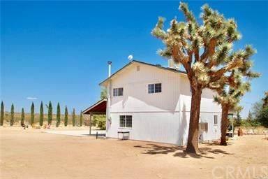 60825 Trentwood Drive, Joshua Tree, CA 92252 (#JT20119058) :: RE/MAX Masters