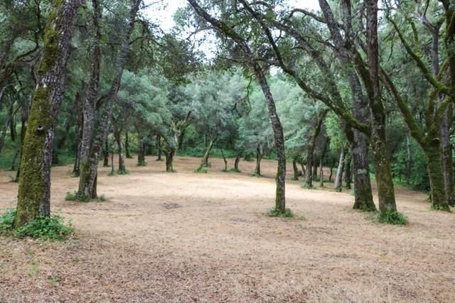 14 Arroyo Sequoia, Outside Area (Inside Ca), CA 93923 (#ML81805018) :: Z Team OC Real Estate