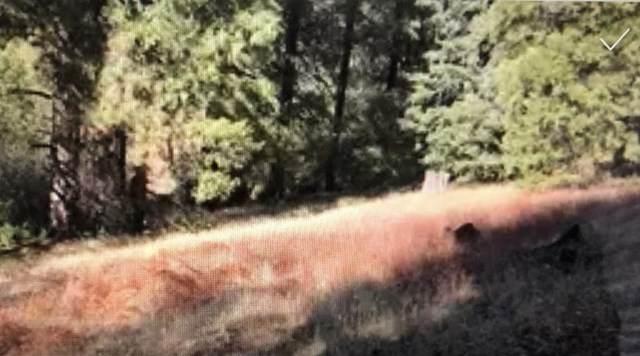 0 Burnt Mill Canyon Road Road, Crestline, CA 92325 (#219050572DA) :: Cal American Realty
