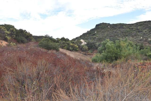 20-Acres Wood Valley Trail, Jamul, CA 91935 (#PTP2001261) :: The Costantino Group | Cal American Homes and Realty
