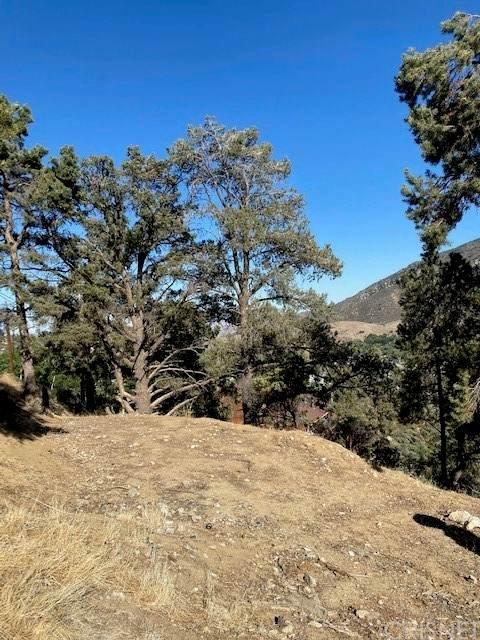 20 Santa Clara, Frazier Park, CA 93225 (#SR21153409) :: The Kohler Group