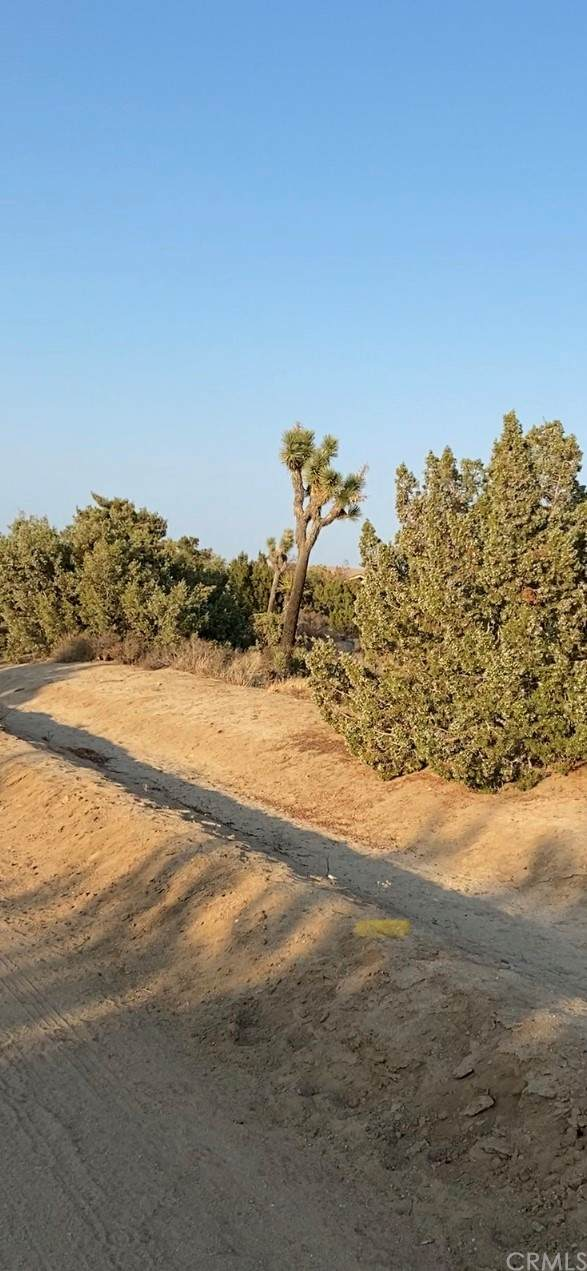 6879 Sunnyhill Road, Joshua Tree, CA 92252 (#JT21167526) :: eXp Realty of California Inc.