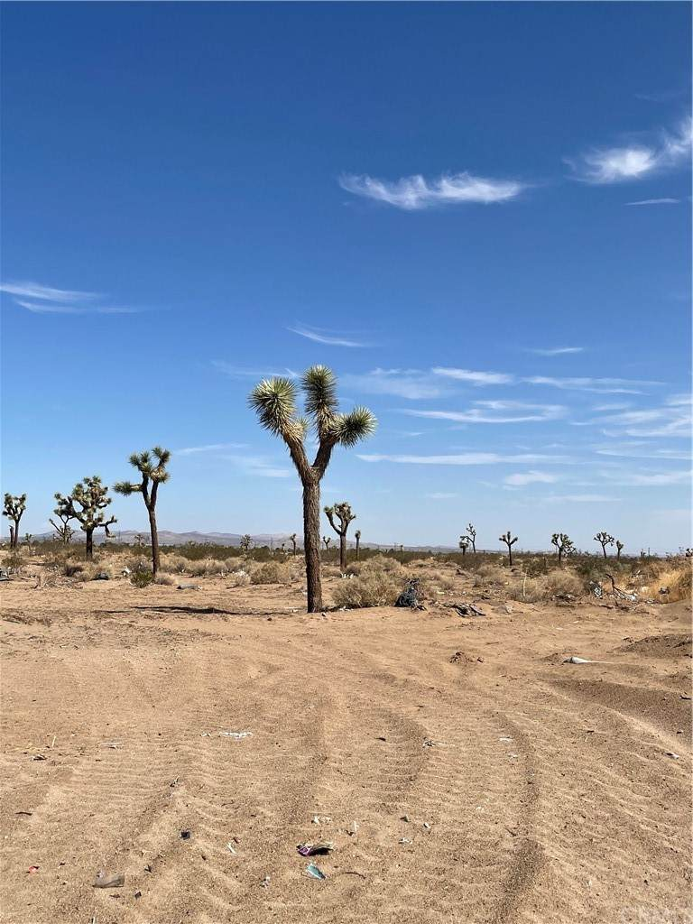 4591132 Yucca - Photo 1