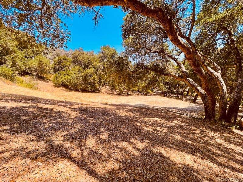 34160 Robinson Canyon Road - Photo 1
