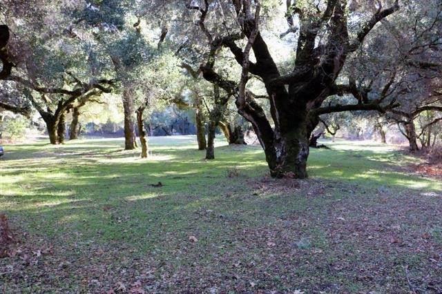 12 Arroyo Sequoia - Photo 1
