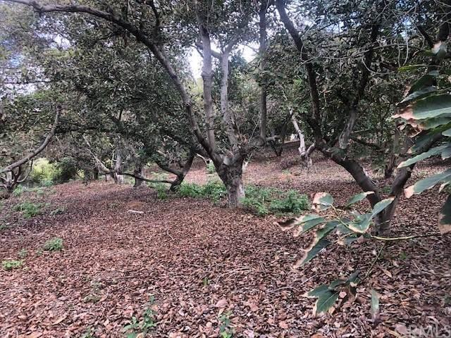 0 Canonita Drive, Fallbrook, CA 92028 (#ND21229919) :: Swack Real Estate Group | Keller Williams Realty Central Coast