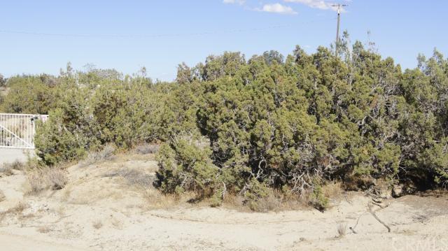0 Vac/96 Ste/Vic Avenue Y2, Juniper Hills, CA 93543 (MLS #CV15051719) :: Desert Area Homes For Sale