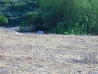 0 Road Runner Ridge, Riverside, CA 92503 (#IG18227638) :: The DeBonis Team