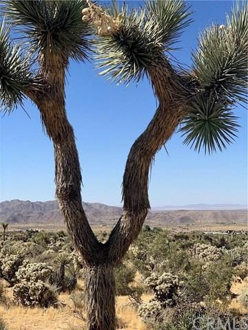 62106 Onaga Trail, Joshua Tree, CA 92252 (#JT19152749) :: The Laffins Real Estate Team