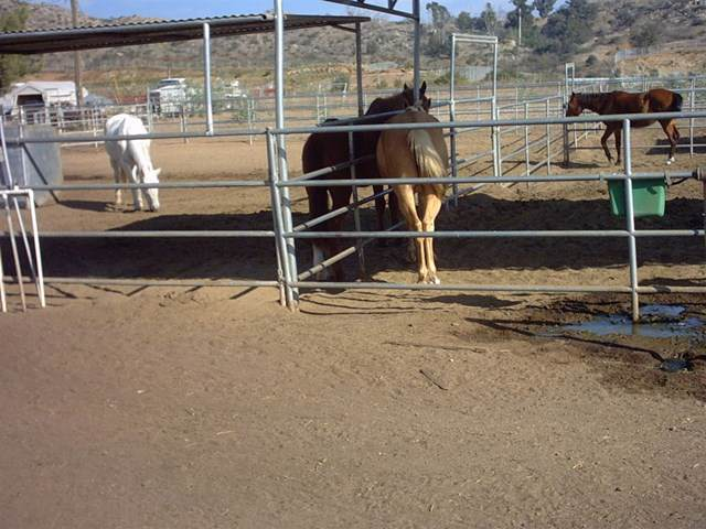 9793 Dunbar Lane, El Cajon, CA 92021 (#190021179) :: Bob Kelly Team