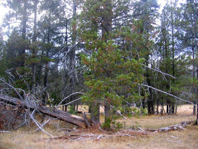 7-Lot White Birch, Bly, OR 97622 (#2988635) :: FORD REAL ESTATE