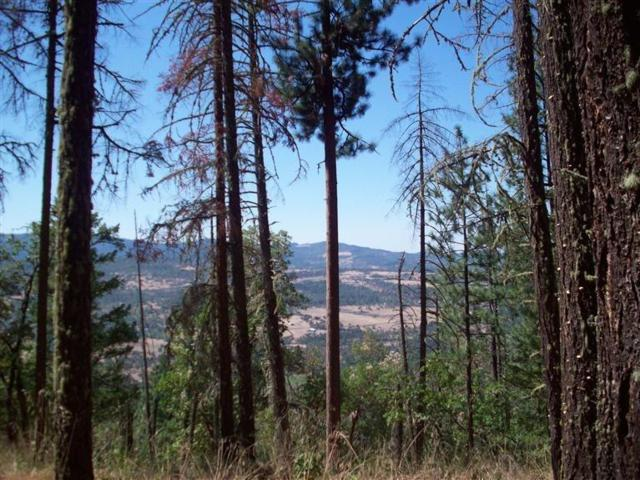 0 South Fork Little Butte Cr, Eagle Point, OR 97524 (#2994356) :: FORD REAL ESTATE