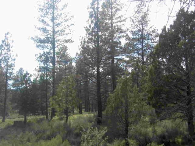12-Lot Klamath Forest, Sprague River, OR 97632 (#2998706) :: FORD REAL ESTATE