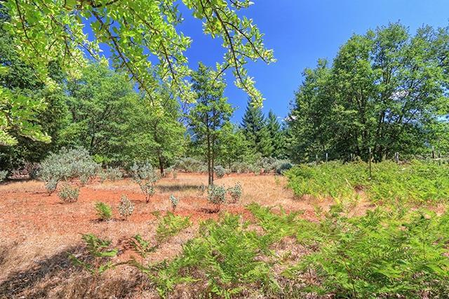 494 Old Onion Mountain Road, Wilderville, OR 97543 (#2978975) :: FORD REAL ESTATE