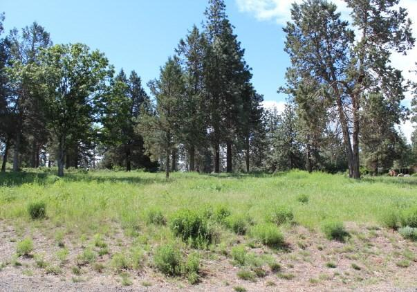 0-LOT 131 Kestrel, Klamath Falls, OR 97601 (#2986068) :: Rocket Home Finder