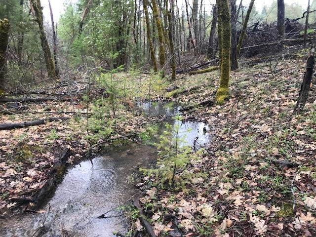 242 Indian Creek, Selma, OR 97538 (#2988601) :: Rocket Home Finder