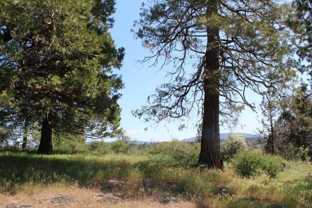 0-LOT 976 Crossbill, Klamath Falls, OR 97601 (#2992348) :: Rocket Home Finder