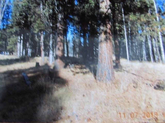 43404 Highway 97 N, Chiloquin, OR 97624 (#3000193) :: FORD REAL ESTATE